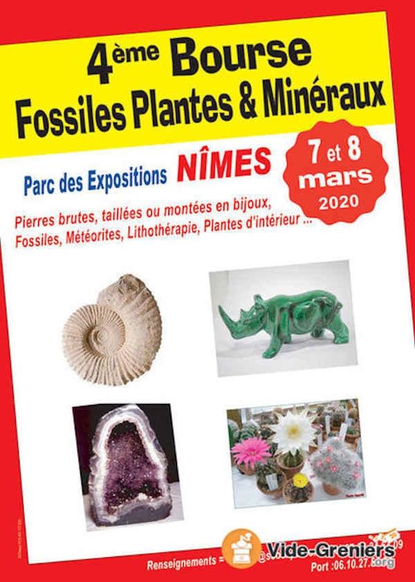 4to intercambio de fósiles, plantas y minerales