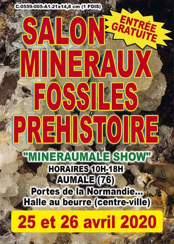 Quinta beca Exposición de minerales y fósiles prehistóricos