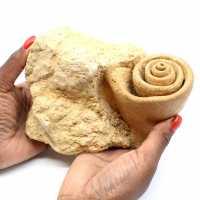 Fósil de gasterópodo